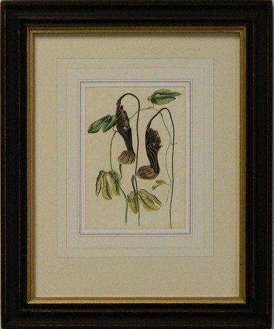 Vintage English Botanical Study Violet III