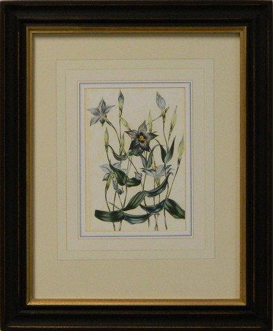 Vintage English Botanical Study Violet IV