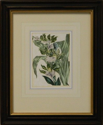 Vintage English Botanical Study Violet VI