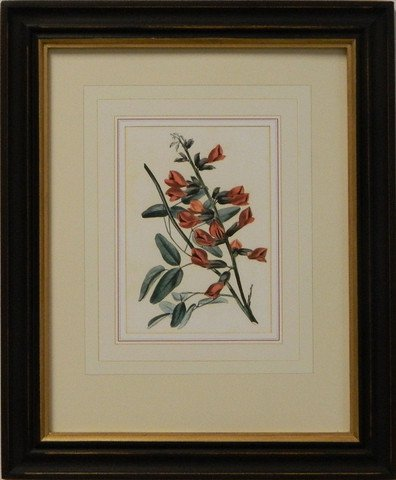 Vintage English Botanical Study Red II