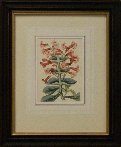 Vintage English Botanical Study Red V
