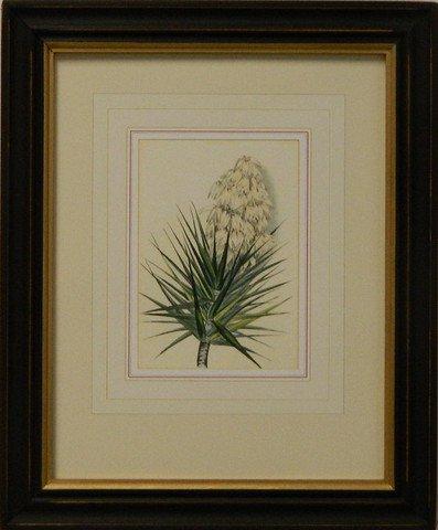 Vintage English Botanical Study Red VI