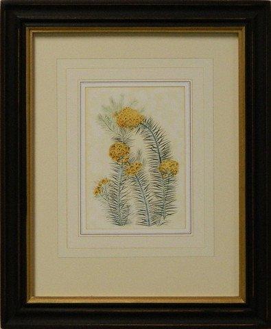 Vintage English Botanical Study Yellow II
