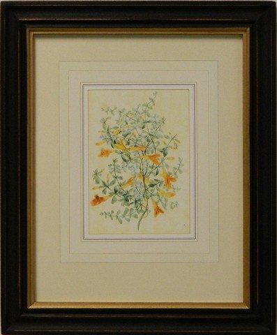 Vintage English Botanical Study Yellow VI