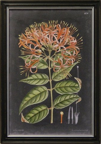 Vintage Slate Botanical I