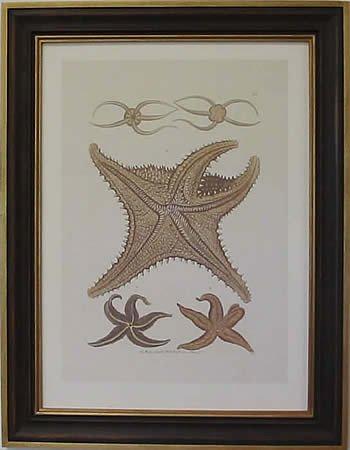 Starfish II Teak Frame