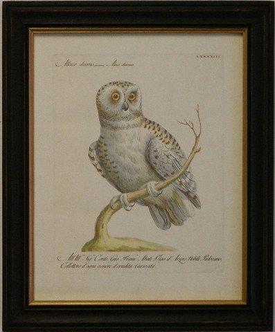 Manetti Owl II