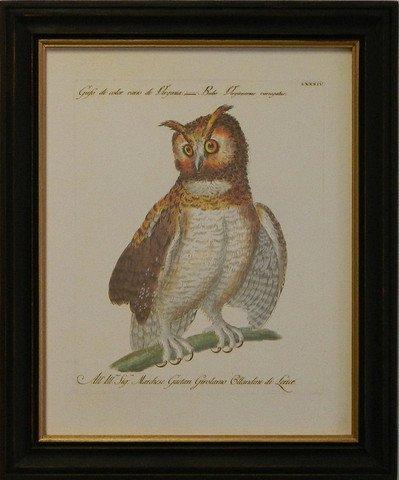 Manetti Owl IV