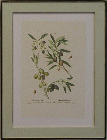 European Olives III