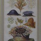 Seaweed Plate E