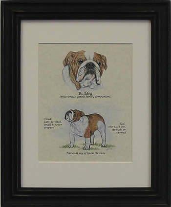Bulldog Red & White-Stack