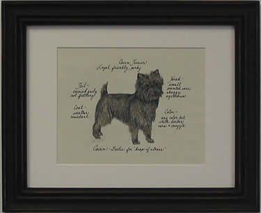 Cairn Terrier, Brindle