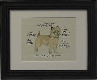 Cairn Terrier, Fawn