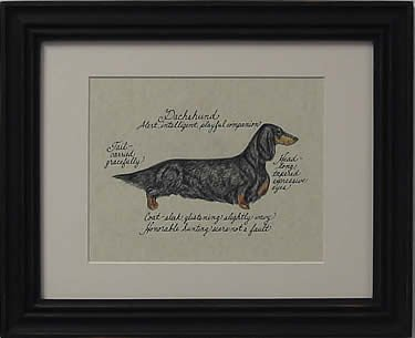 Dachshund Long Hair, Black & Tan