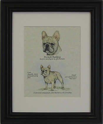 French Bulldog Fawn-Stack