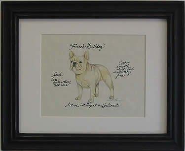 French Bulldog, Fawn