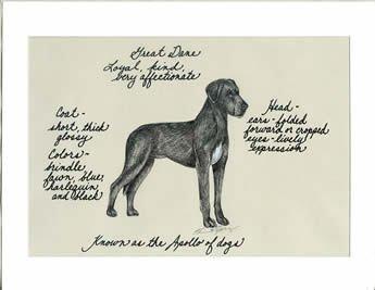 Great Dane, Black Uncropped Ears