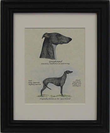 Greyhound Black-Stack
