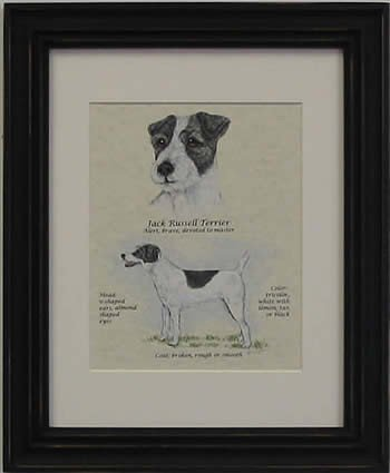 Jack Russell Rough Black & White-Stack