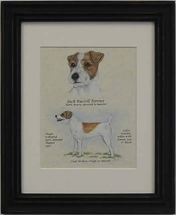 Jack Russell Rough Brown & White-Stack