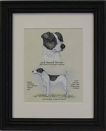 Jack Russell Smooth Black & White-Stack