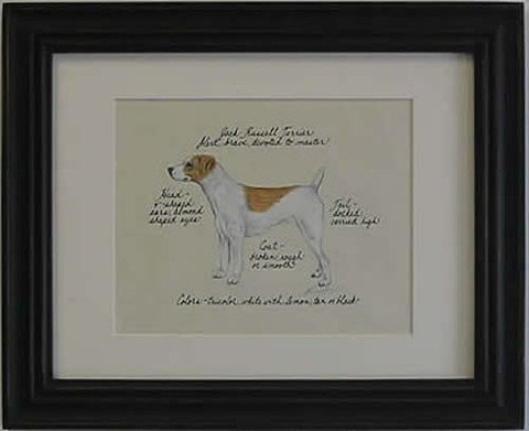 Jack Russell Smooth, Brn & White
