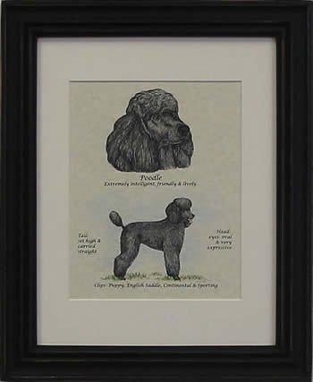 Poodle Puppy Cut Black-Stack