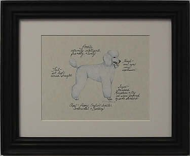 Poodle, White Puppy Cut