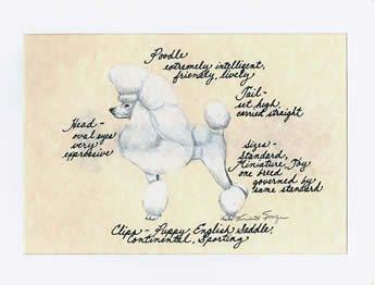 Poodle, White Show Cut