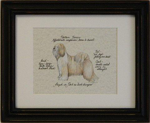 Tibetan Terrier, Blonde