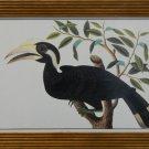 Hornbill Birds of Malaca