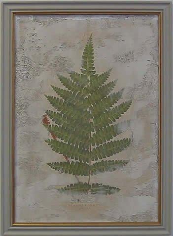 Fern Fresco IV