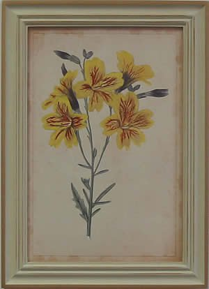Curtis Blooms Yellow IV - Pussywillow Frame