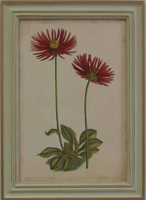 Curtis Blooms Red II - Pussywillow Frame