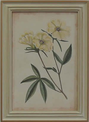 Curtis Blooms White IV - Pussywillow Frame