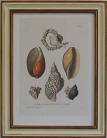 Shells I Pecan Frame