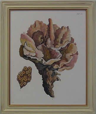 Antique Coral III