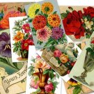 DVD 500 Victorian Vintage FLORAL ILLUSTRATIONS art images, pictures, scans