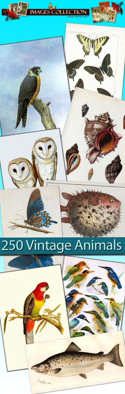Digital collection 'Australian Birds ,  Miscellany vintage print