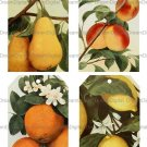 Printable Gift Tags, Vintage Fruit Illustrations, Digital Background
