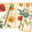 Botanical Aged Paper, Floral, Collage Sheet, Tags, Labels, Printable Gift Tags