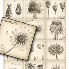 Botanical Drawings, 2.5 inch Squares, Digital Collage Sheet, vintage print