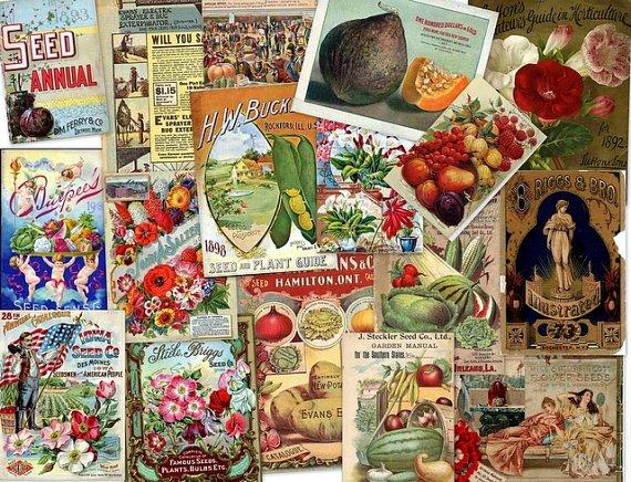 DVD Old Flowers Fruit Seed Feed ADVERTISING CATALOG Images eBooks Photos Illus