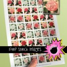 1 Inch Squares HEIRLOOM ROSES Collage Sheet-print for PendantsMagnets