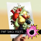 Vintage Fruit Bouquet Large Digital Scrapbooking Image Fruit Digital Image