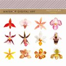 Orchids Clip Art - Flowers Clipart- Digital Collage Sheet - Orchids