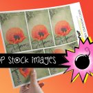 Poppy Dreams Digital print Journal Tags--Print Your Own Journal or Scrapbook Tags-