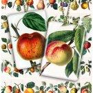 3 Collages FRUITS 01-03-04 vintage print