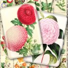 2 Collages FLOWERS 02-03 vintage print