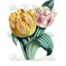 BEAUTIFUL FLOWER-007 Tulips vintage print